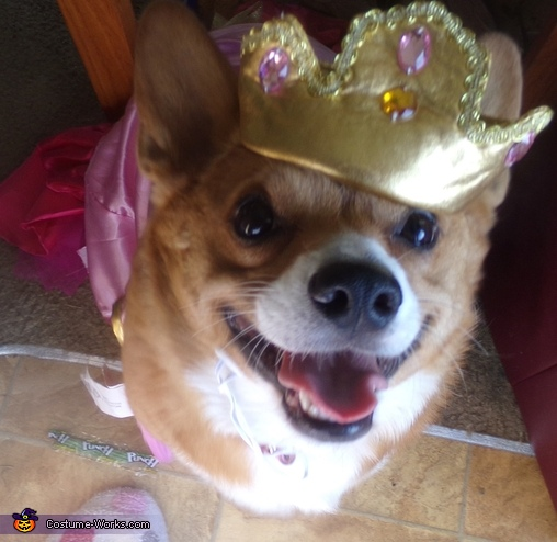 Pretty portly Princess corgi, Pretty Princess Costume