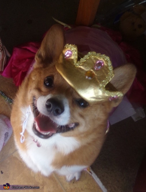 Happy portly Princess corgi, Pretty Princess Costume