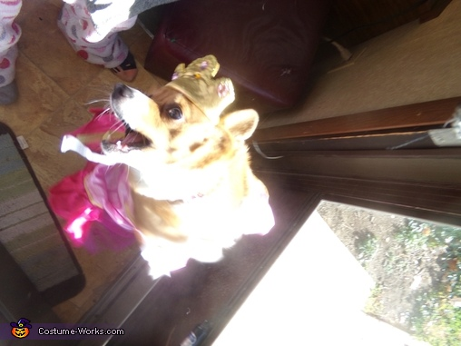 Lippy portly Princess corgi, Pretty Princess Costume