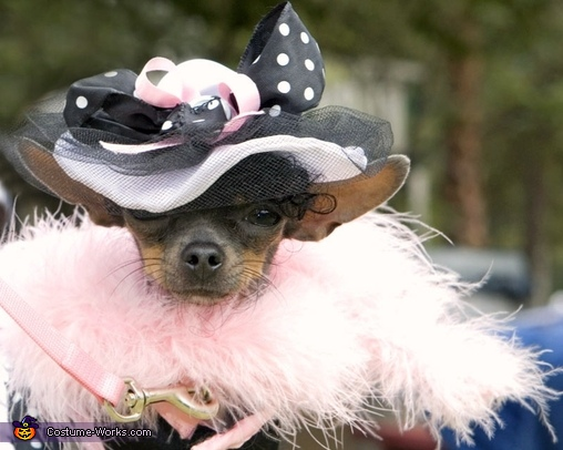 Pretty Woman Dog Costume