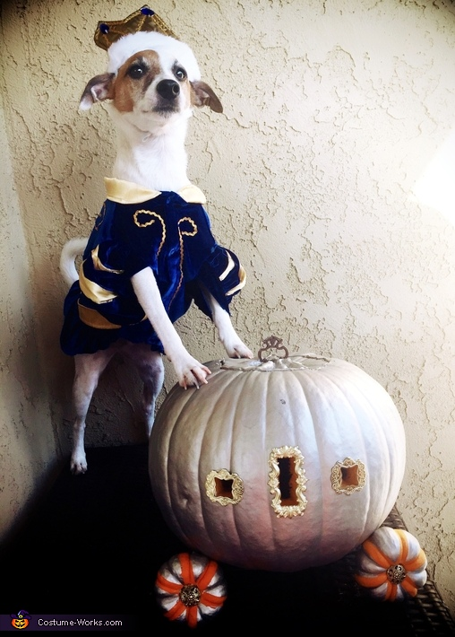 Prince Charming Dog Costume