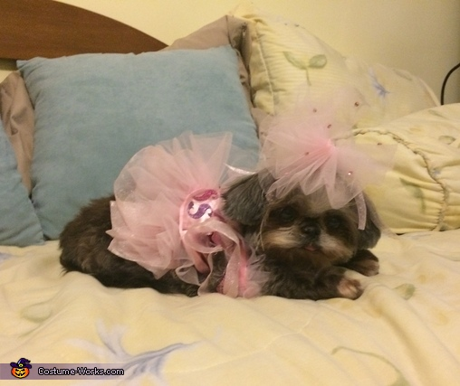 Princess Ballerina Dog Costume