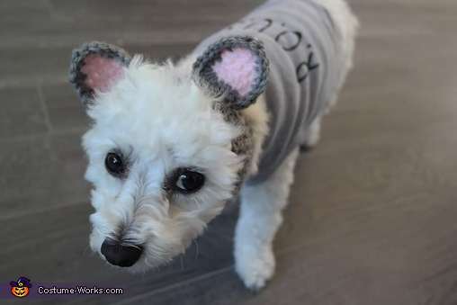 My puppy Elsa as a rodent of unusual size., Princess Bride Costume