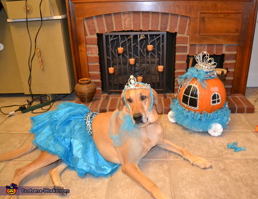 Princess Lacey, Princess Dog Costume