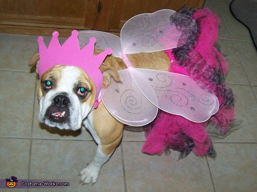 Annabelle the Princess Fairy Costume