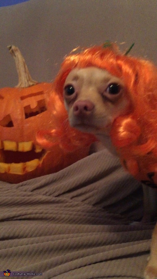 Princess of Jack O' Lanterns Dog Costume