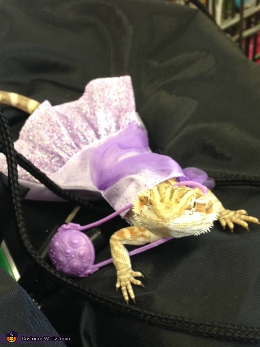 Prom Queen Bearded Dragon Homemade Costume