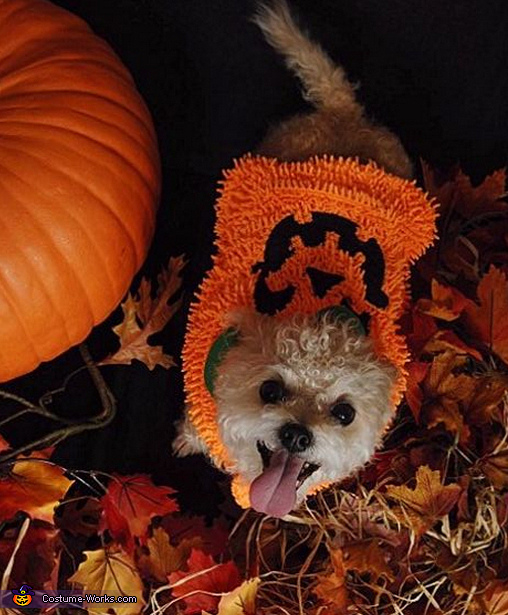 Cutest Pumpkin Dog Costume