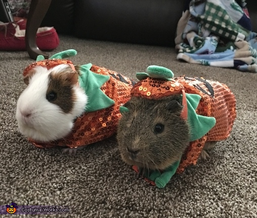 Pumpkin Piggies Costume