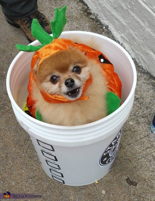 The Original Pumpkin Spiced Latte Costume