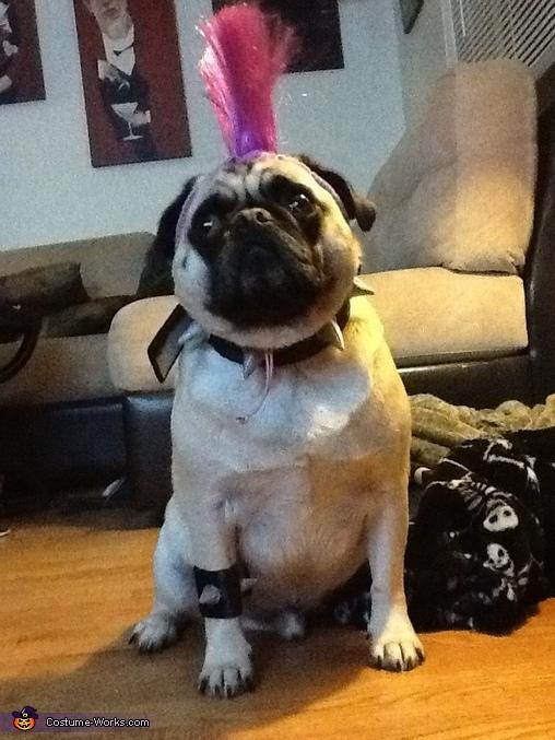 Punk Rock Pug Costume