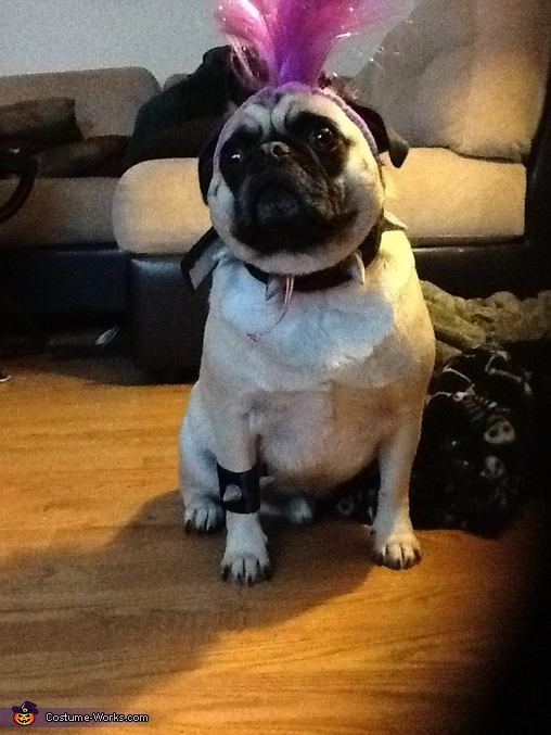 Punk Rock Pug Costume