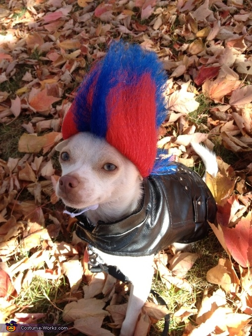 Punk Rock Puppy Costume