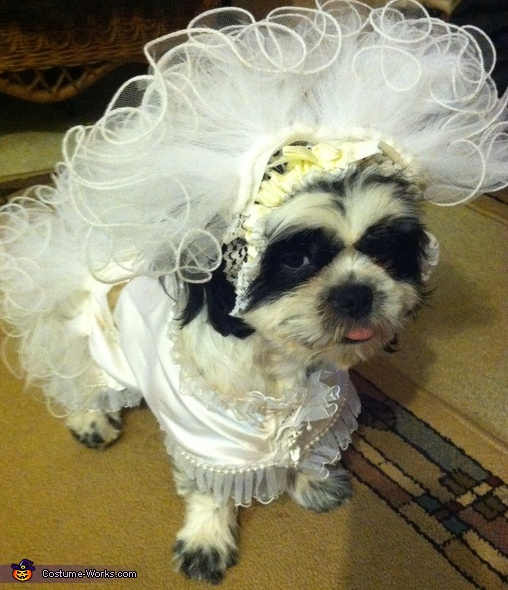Puppy Bride Costume