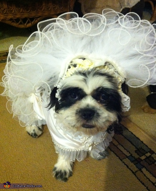 Front view of Moshi, Puppy Bride Costume