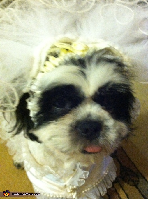 Up close view of Moshi, Puppy Bride Costume