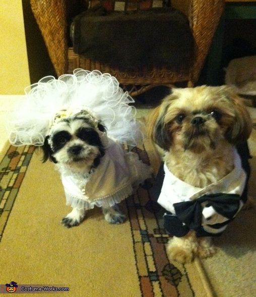 Moshi with her groom, Puppy Bride Costume