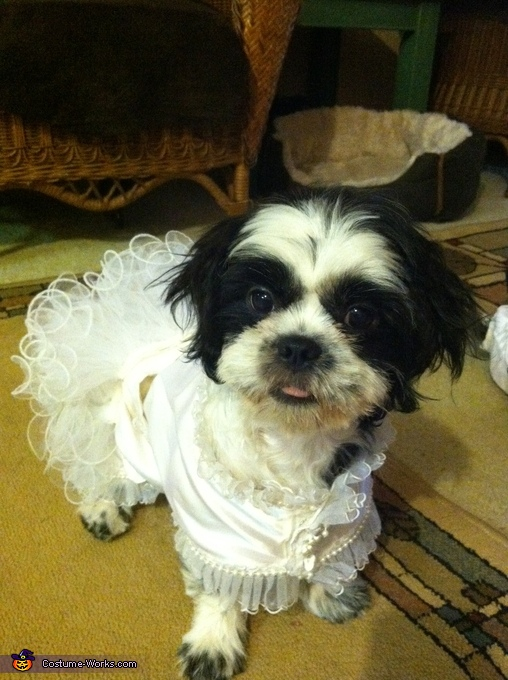 Moshi without the veil, Puppy Bride Costume
