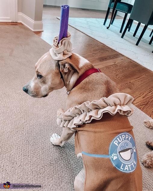 Puppy Latte Homemade Costume