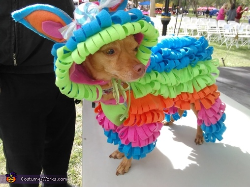 Puppy Piñata Costume