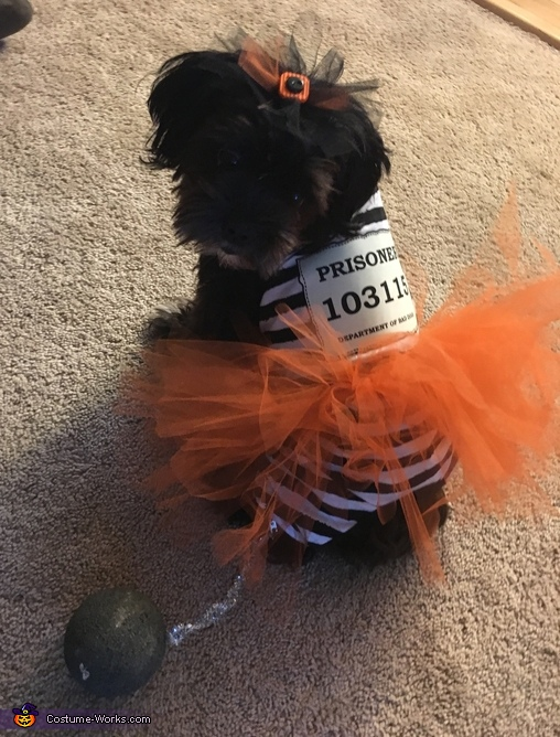 Puppy Prisoner Costume