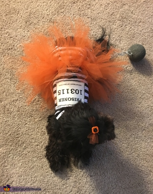 Bad Bella, Puppy Prisoner Costume