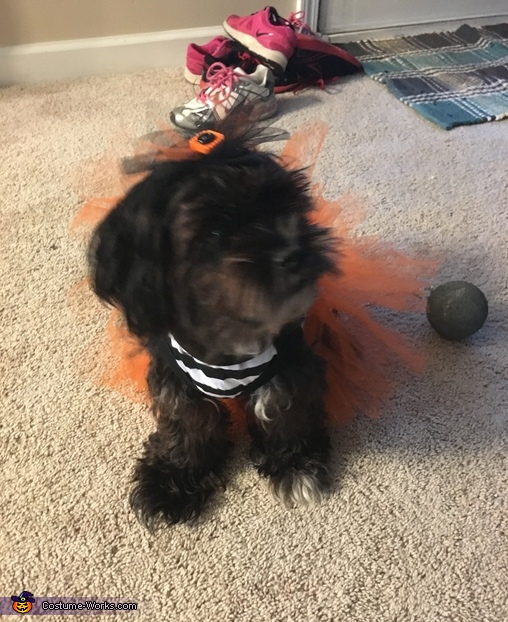 Devious Diva, Puppy Prisoner Costume