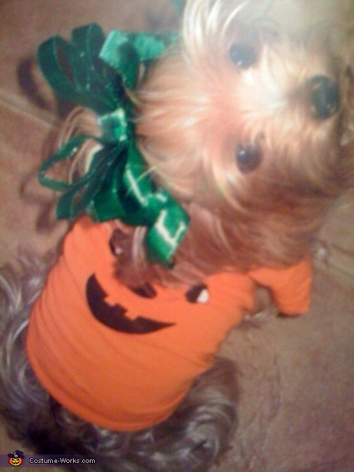 Puppy Pumpkin Costume