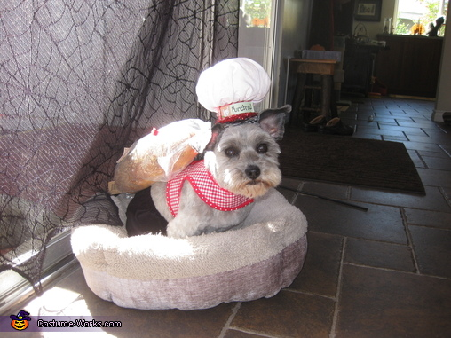 "Purebred in bed, ""Purebred"" Costume"