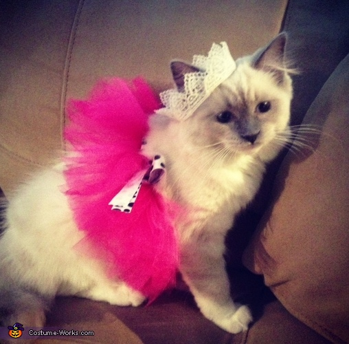 Purr-incess Costume