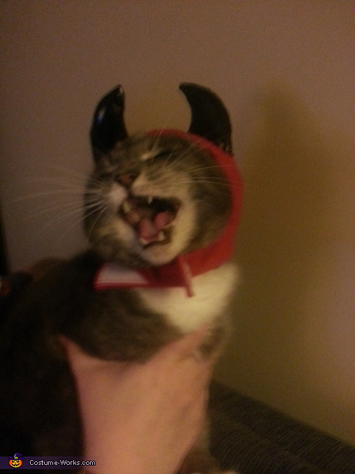 Purrrfectly Evil Kitty Homemade Costume