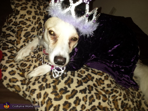 Queen Dog Homemade Costume