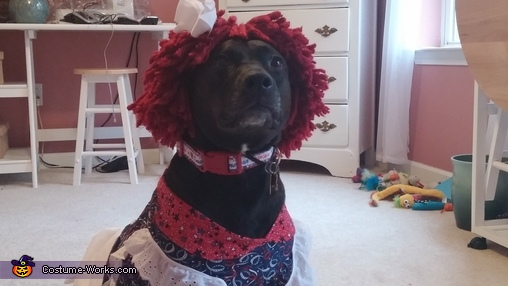 Raggedy Ann Dog Homemade Costume