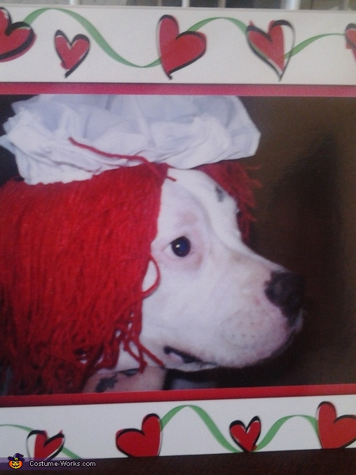 Raggidy Ann Dog Costume