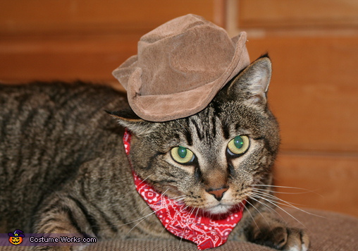 Cat Cowboy - Homemade costumes for pets