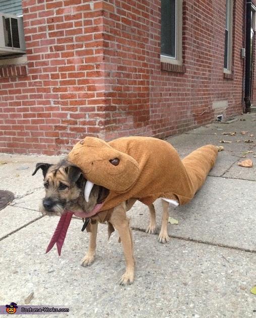 Rattlesnake Dog Costume