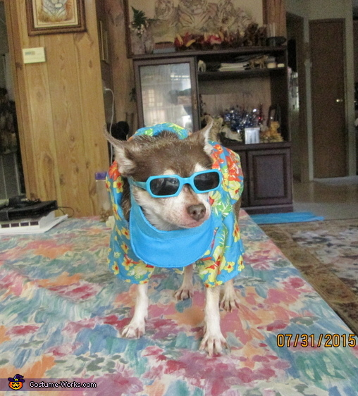 Gizmo Ready for the Beach Costume