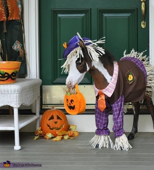 Tiny Horses in Costume