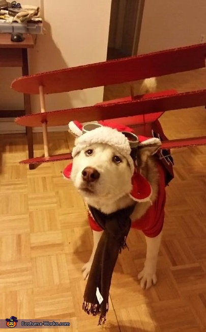 Red Baron Dog Homemade Costume