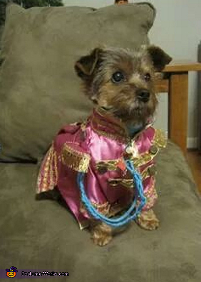 Sgt. Pepper's Lonely Hearts Ringo Dog Costume