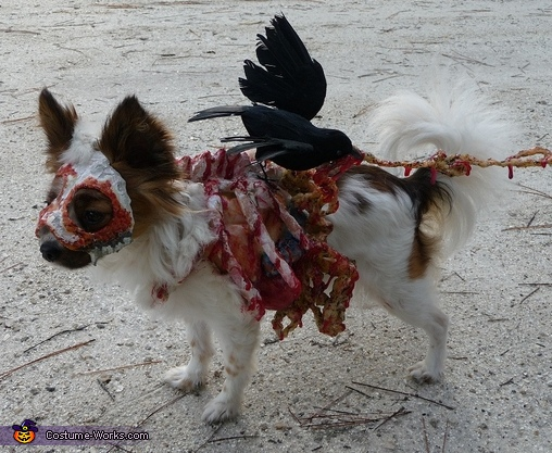 Roadkill Zombie dog closeup of left side, Roadkill Zombie Dog Costume