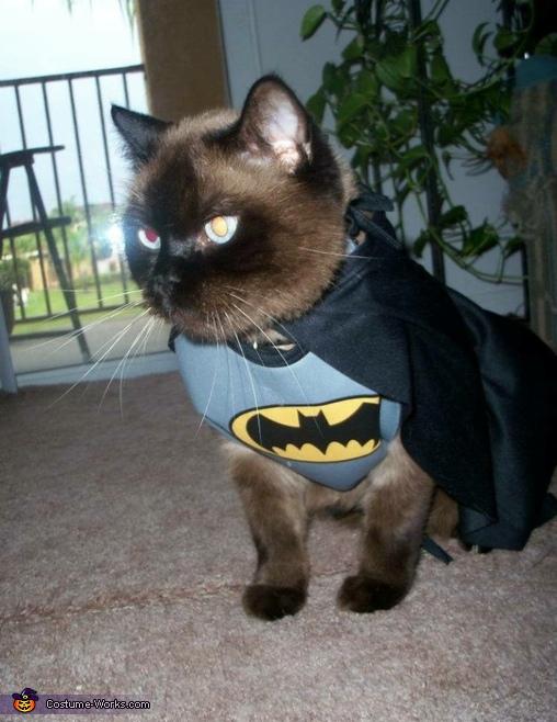 Romeo the Bat Cat Costume