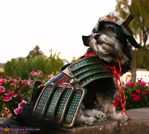 Rosco The Last Dog Samurai, Rosco The Last Dog Samurai Costume