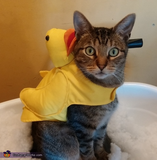 Rubber Duck Flash, Rubber Ducky Cat Costume