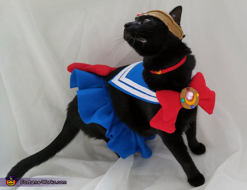Sailor Mewn Homemade Costume