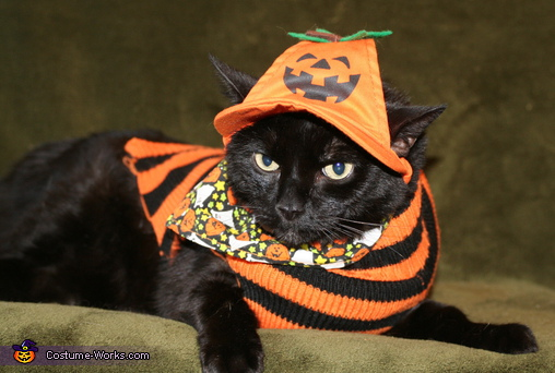 Pumpkin Cat - Homemade costumes for pets