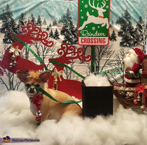 Santa' New Rudolph Costume