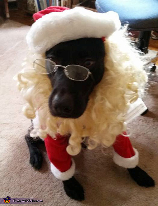 Front view of Riley Santa Paws, Riley Santa Paws Costume