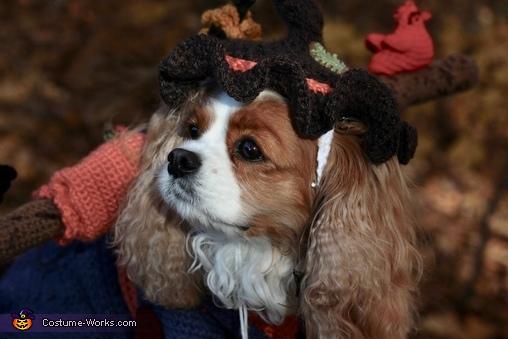 Roxie, Scarecrow Roxie Costume