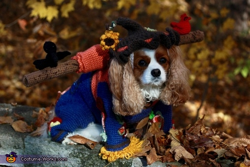 King Charles, Scarecrow Roxie Costume